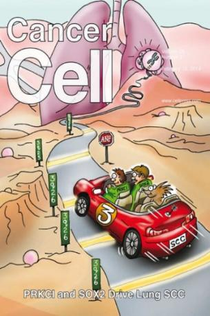cancer-cell-february-2014